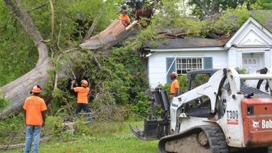 Photo of How Can A Tree Service Company Help You