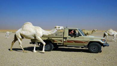 Photo of Jobs in Saudi Arabia