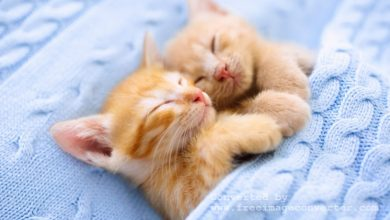 Photo of Choosing The Right Cat Breeds For Your Home